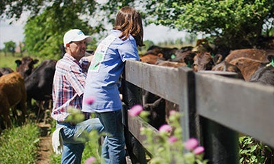 a man and a young girl stood on the fence looking into a field of cows