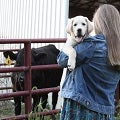 girl holding a dog with cattle in the background