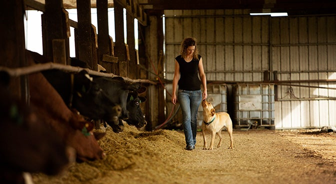 woman walking and stroking dog in a barn with cows next to them in pens