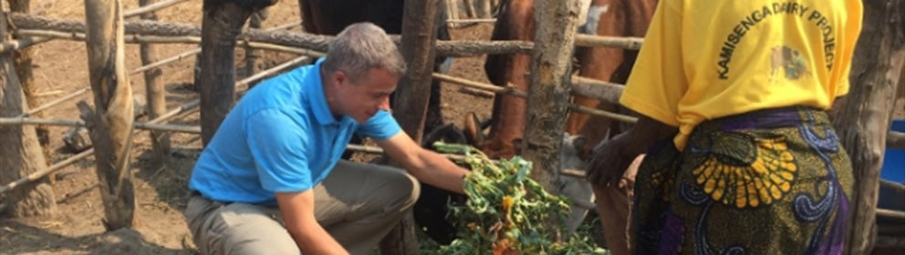 man knelt down touching a plant next to a pen of cows