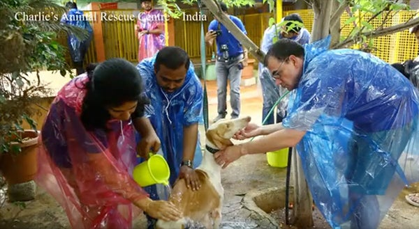 two men and a woman cleaning a dog at Charlie's animal rescue centre in India