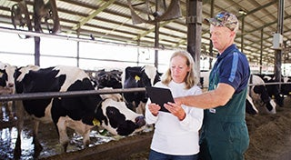 man and woman looking at a digital pad in front of a pen full of cows