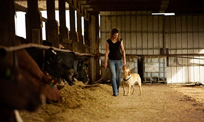 woman walking through a barn next to a cow pen whilst stroking a dog