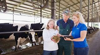 un granjero y dos mujeres con una sosteniendo el alimento y todos lo inspeccionan frente a un rebaño de vacas
