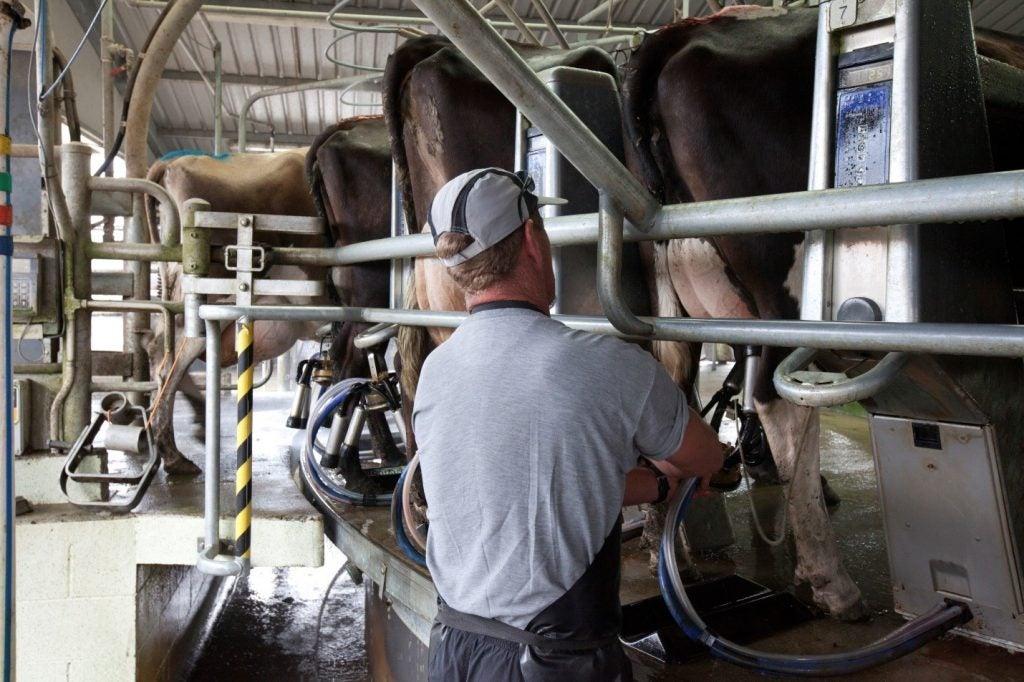 Farmer at a milk machine