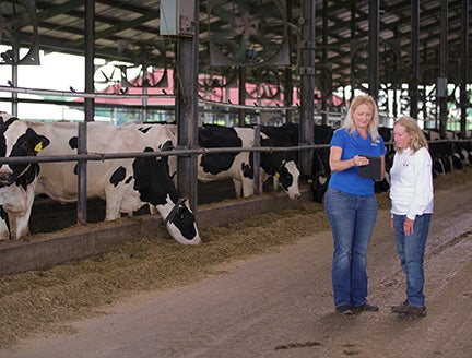 two women looking at a digital pad next to a pen of cows
