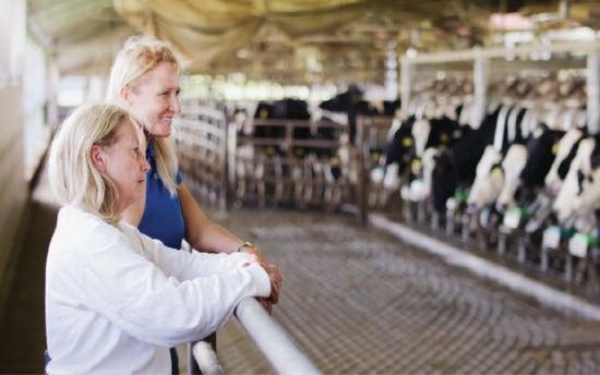women standing in a dairy barn