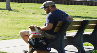 Man sitting on a bench with his service dog.