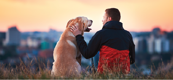 Man sitting on a hill watching sunrise with dog