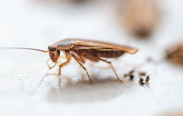 a cockroach in augusta georgia