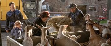 livestock_357x150.jpg
