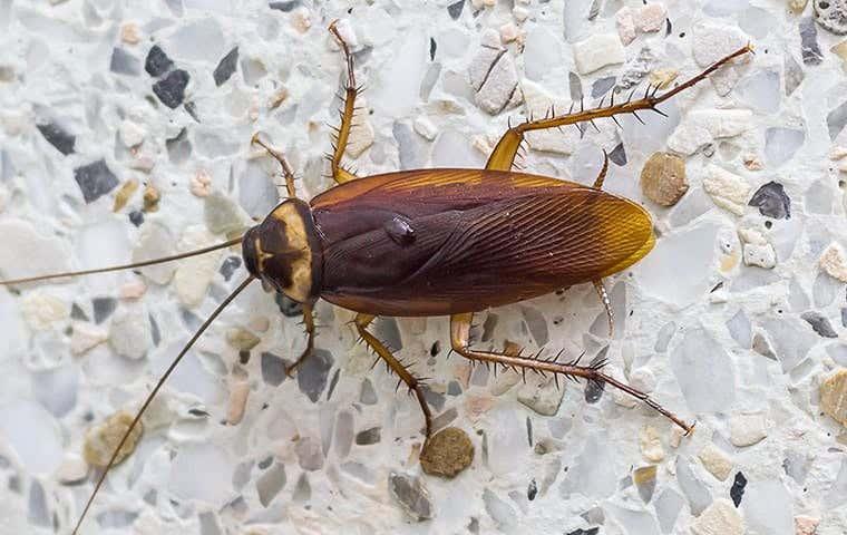 cockroach in a bathroom
