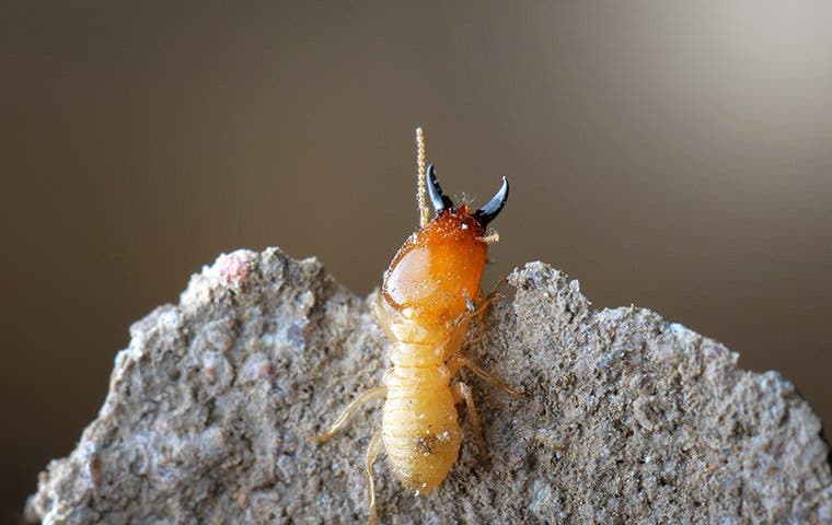 a termite crawling out of its nest
