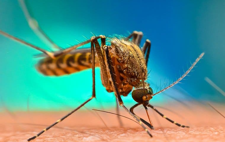 mosquito on skin in atlanta georgia