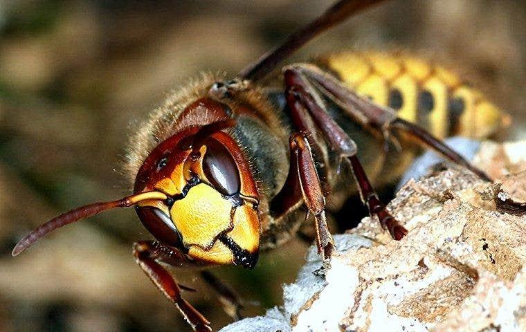 wasp closeup on nest