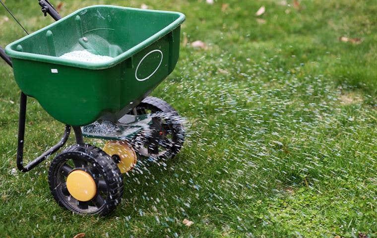 treating lawn