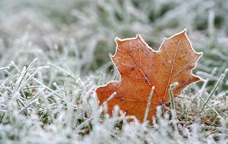 fall leaf in frostbitten grass