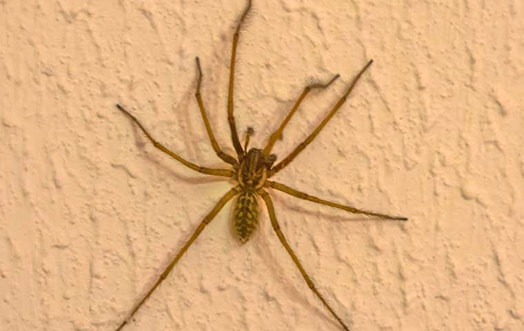 spider on a wall in durham north carolina
