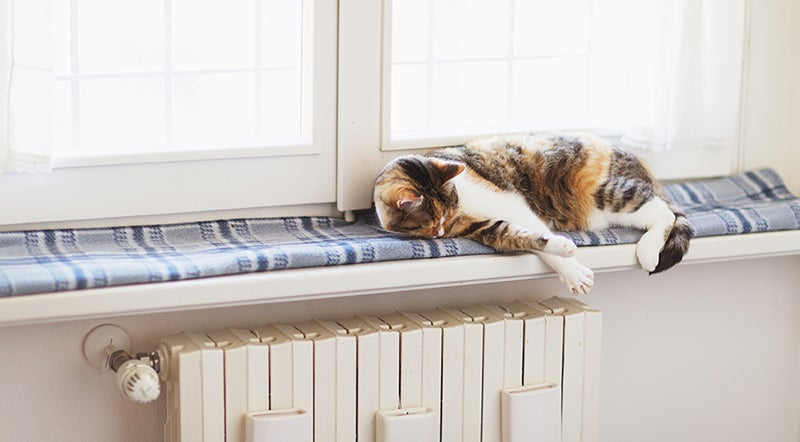 Cat lying on a cosy blanket on a window sill over a radiator.