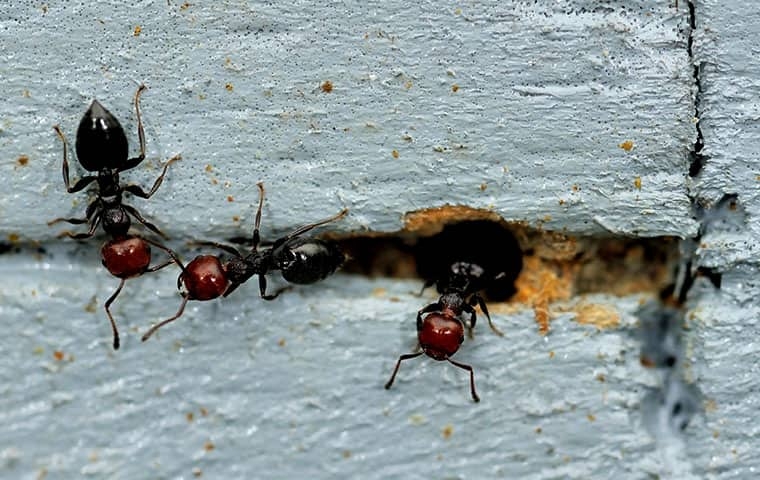 ants coming out of a crack