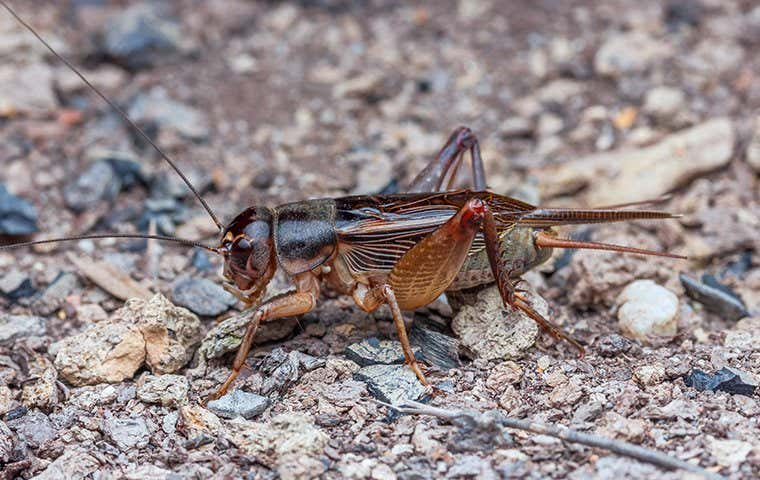 cricket on the ground in seabrook texas