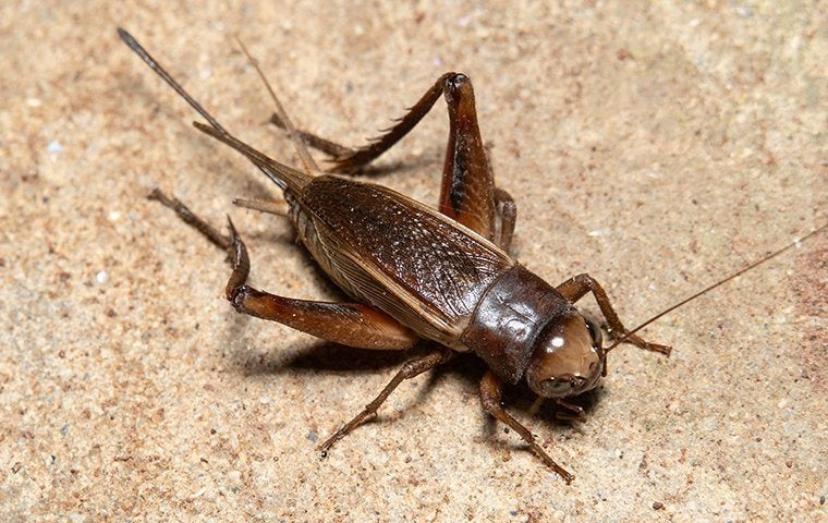 a cricket on a kitchen floor
