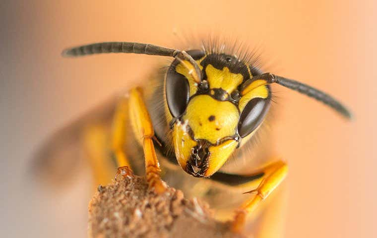 a wasp in seabrook texas