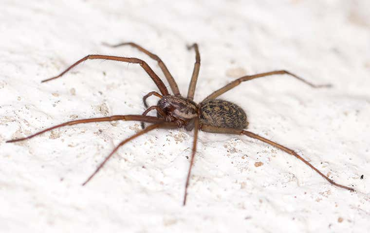 spider on a wall in seabrook texas