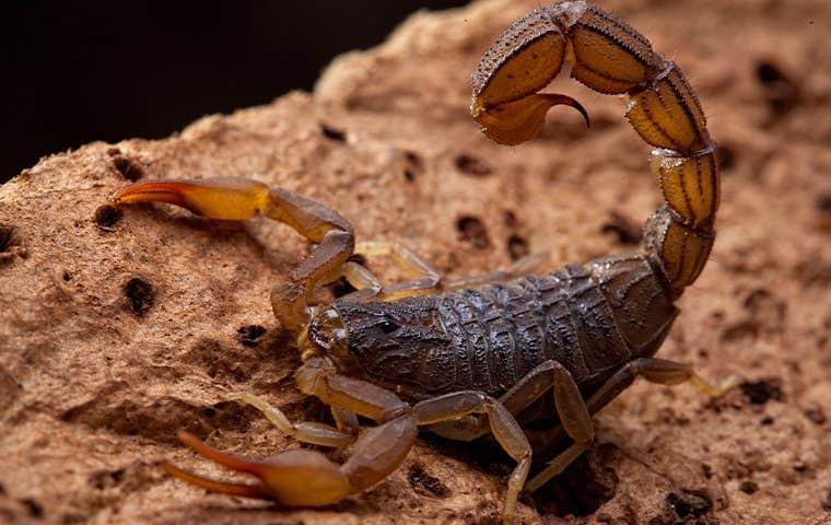 a scorpion on a log