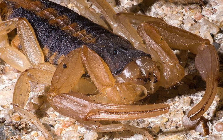 a scorpion up close
