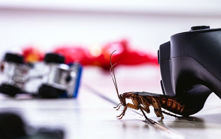 a cockroach crawling on a living room floor