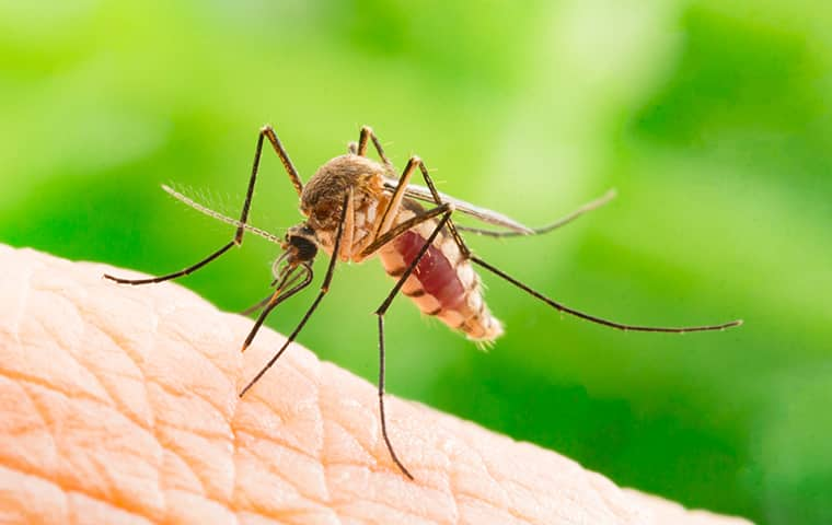 mosquito biting a person in a spring tx yard