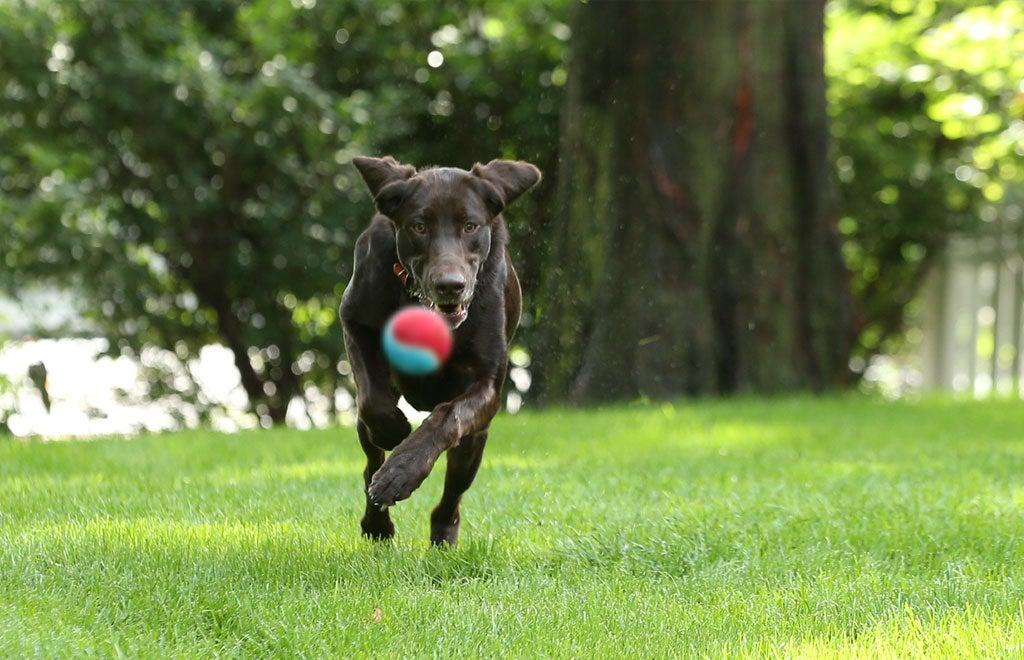 6a-Elanco-small-dog-w-owner-Gal-6720 x 4480