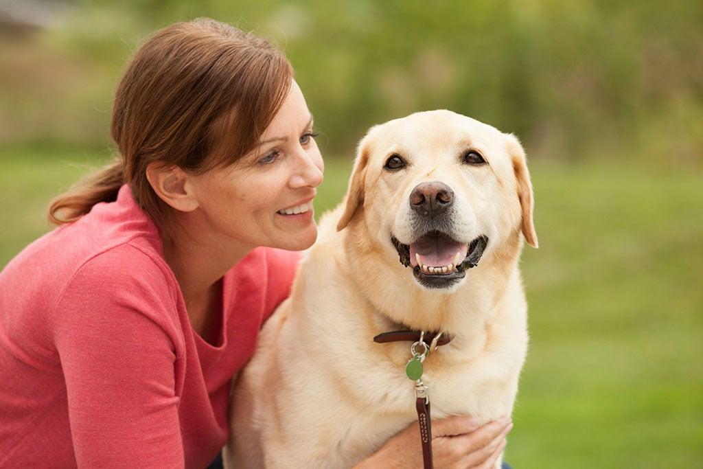 3a-Elanco-small-dog-on-sofa-Gal-6720 x 4480