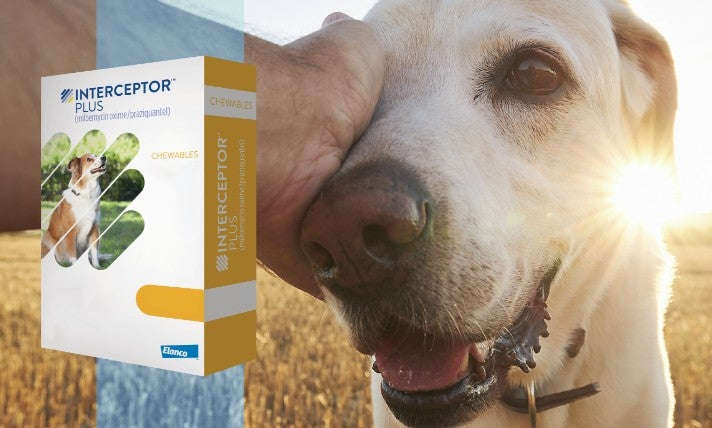 Interceptor Plus product pack shot with a dog looking at you on a field and the sun in the background