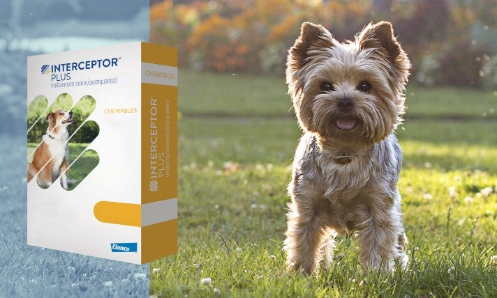 Credelio product with a dog looking at you