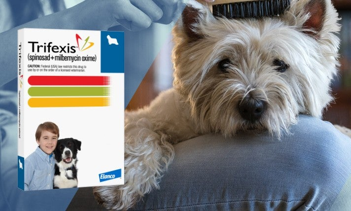 Trifexis product pack shot with a dog looking at you with someone combing their hair
