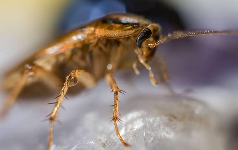 roach closeup standing on rock