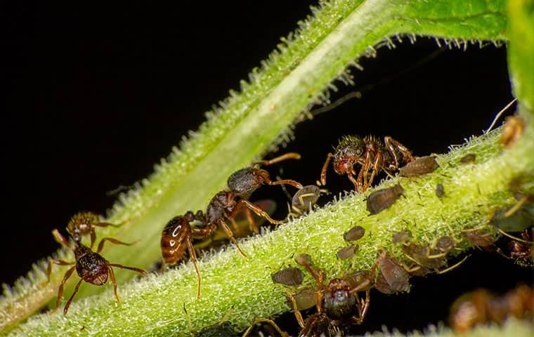ants closeup on plant