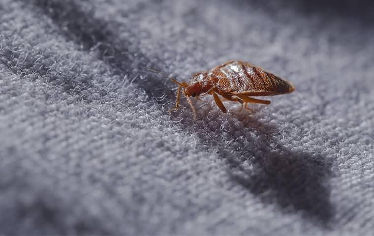 Bed bug crawling on fabric in a Roosevelt, UT home