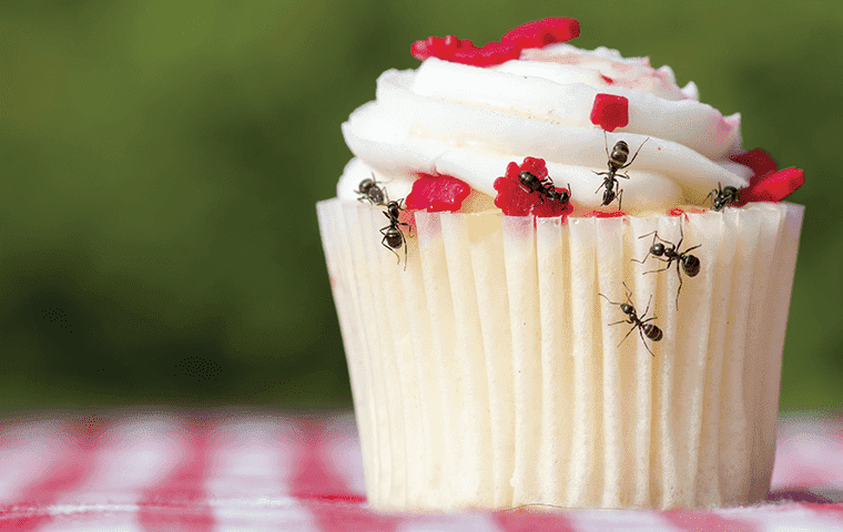 Ants crawling on a cupcake in Vernal, UT
