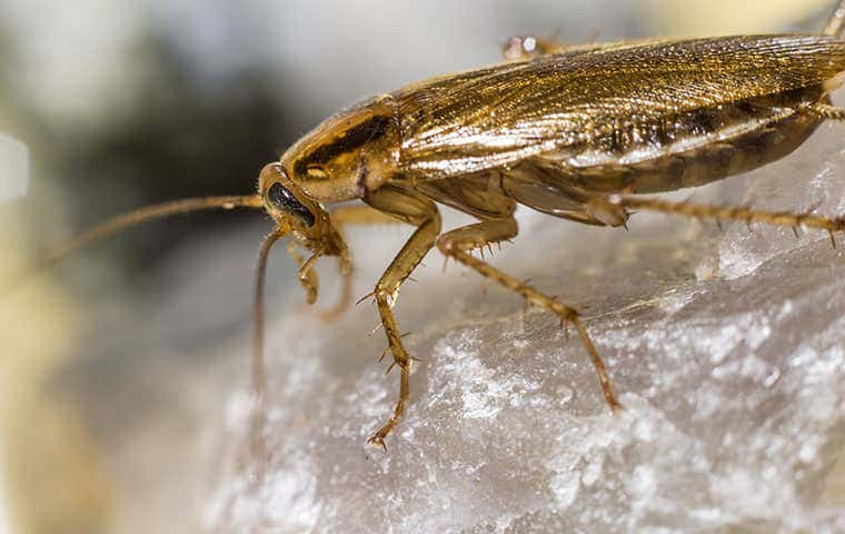 cockroach standing on rock