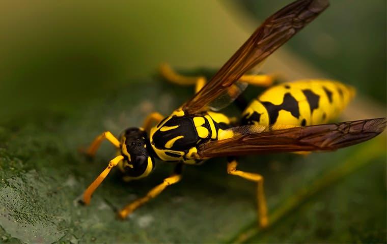 a wasp on a plant leaf