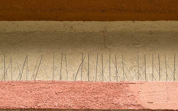bird spikes in manteca california