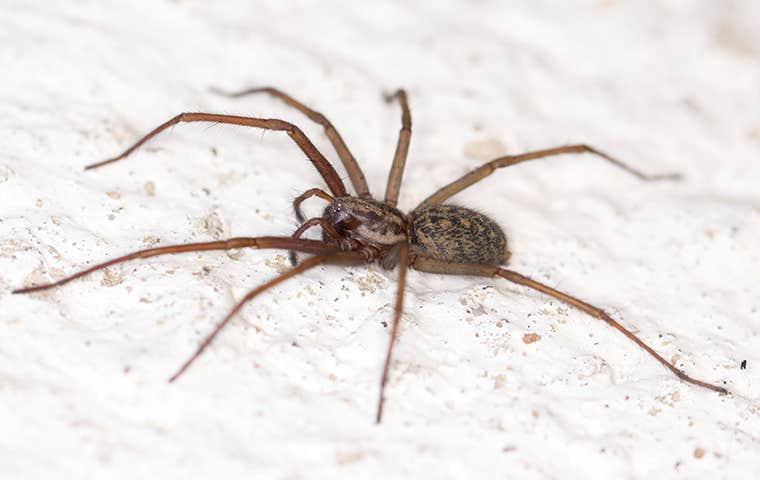 a house spider crawling on a the floor of a house