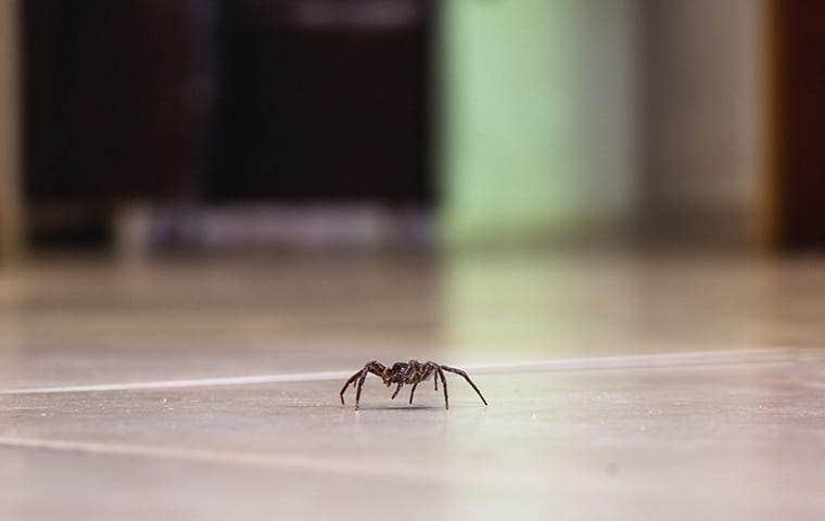 spider crawling inside a stockton home