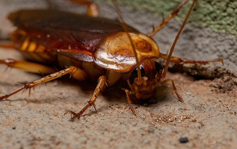 cockroach in duluth georgia