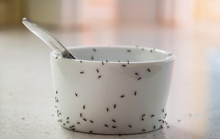 ants crawling on a dish in duluth georgia