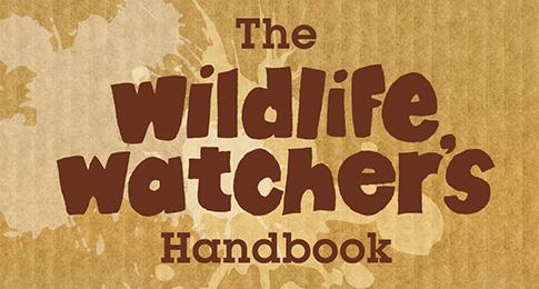 Wildlife Trusts Teaser