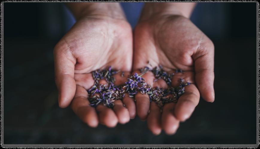 Hands holding petals